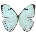 Mint-Morpho icon