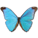 Morpho Absoloni icon