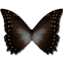 Morpho Amphitrion icon
