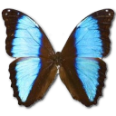 Morpho Deidamia Neoptolomous icon