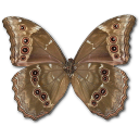 Morpho Didius Underside icon