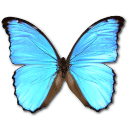 Morpho Didius icon