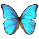 Morpho Godarti icon