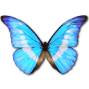 Morpho Helena Personal icon