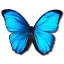 Morpho Menelaus icon