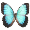 Morpho Peleides Montezuma icon