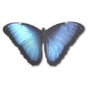 Morpho Peleides icon