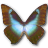 Morpho Cissis icon