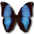 Morpho Deidamia Erica icon