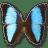 Morpho-Deidamia-Neoptolomous icon