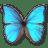 Morpho Godarti icon