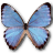 Morpho Partis Thamyris icon