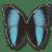 Morpho-Patroclus-Orestes-Male icon