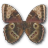 Morpho Peleides Montezuma Underside icon