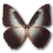 Morpho Telemachus icon