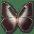 Morpho Telemachus icon