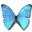 Morpho Adonis Huallega Top icon