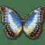 Morpho-Cypress-Cyanides-Female icon