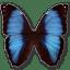 Morpho-Deidamia-Erica icon