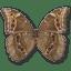 Morpho-Didius-Underside icon