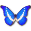 Morpho-Helena icon