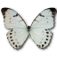 Morpho Luna Male icon