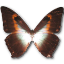 Morpho Phano Red icon