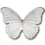 Morpho Polyphemus icon