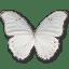 Morpho Polyphemus icon