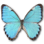 Morpho-Portis-Male icon