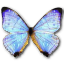 Morpho-Sulkowski-Pearl-Morpho icon