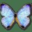 Morpho-Sulkowski-Pearl-Morpho icon