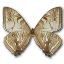 Morpho-Sulkowski-Underside icon