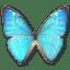 Morpho Zephyritis Male icon