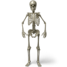 Standing-skeleton icon