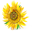 http://icons.iconarchive.com/icons/artua/ukrainian-motifs/64/Sunflower-icon.png
