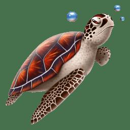 Turtle icon