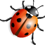 http://icons.iconarchive.com/icons/ergosign/free-spring/64/ladybird-icon.png
