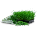 Wheatgrass tray bag icon