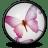 InDesign CS 2 icon
