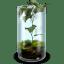 Mossy-Terrarium icon