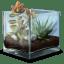Succulent Terrarium icon