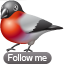bullfinch follow icon