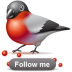 Bullfinch-follow icon