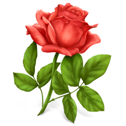rose icon