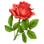 http://icons.iconarchive.com/icons/icondrawer/gifts/64/rose-icon.png