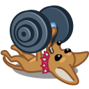 dog barbell icon