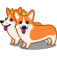 dog corgi icon