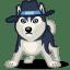 Dog haski icon
