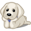 Dog labrador icon